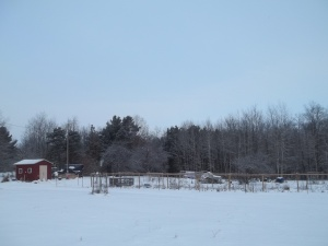 Winter scene of the chicken garden